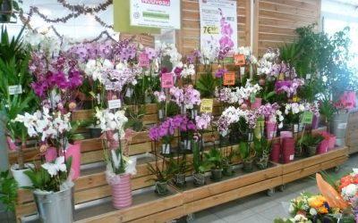 Bouquet de fleurs à Thonon